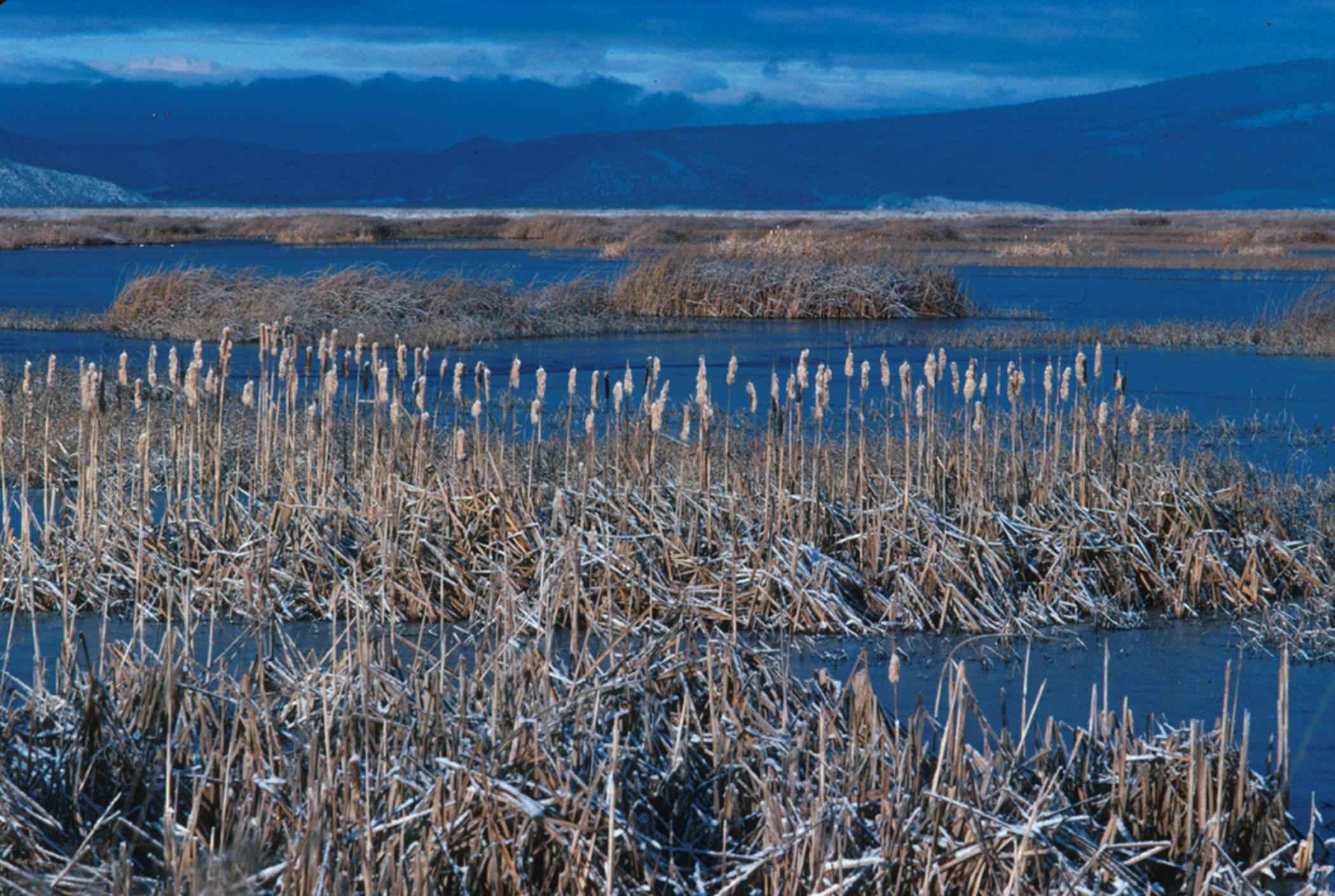 typical_wetland_plants_wetland_flora