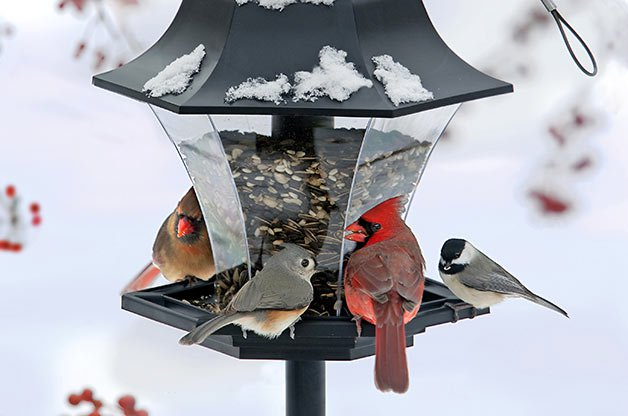 flock_behavior_birding_basics